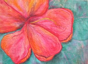orange hibiscus jpainedawes